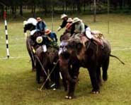 Elephant polo is an example of animals being used in sports.