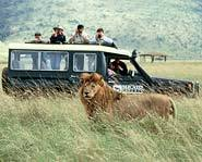 Looking for adventure this summer? Discover amazing animals and ecosystems on a summer safari!