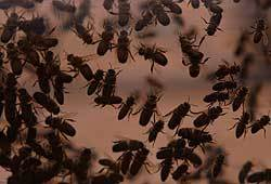 House flies run rampant in cities and on farms.