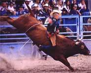 World's Most Dangerous Sports - Bull Riding