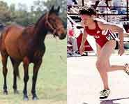 Weird Competitions: Animal vs Horse