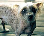 Dog or rodent?