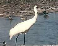 There are only 320 Whooping Cranes left on Earth.