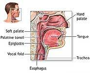Relaxed muscles in the throat vibrate.