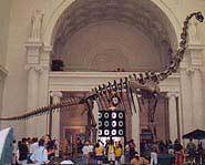 Fossil at Field Museum.