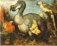 The Dodo & Given, by G. Edwards in 1750.