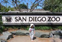 There are many family attractions at the San Diego Zoo.