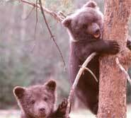 Baby Bears are sooooo CUTE!