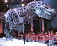 Sue, the most complete fossil of a Tyrannosaurus Rex.