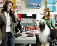 Picture of a scene from Disney's The Shaggy Dog.