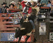 Photo of bullrider on the Professional Bull Riders Tour.