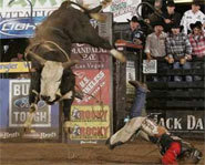 Picture of bullrider on the Professional Bull Riders Tour