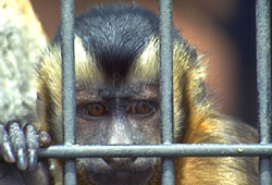 PETA campaigns to stop animal testing.