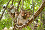 Disneynature's Monkey Kingdom Blu-ray Giveaway!
