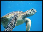 Seaturtle poll