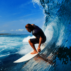 Surfing poll