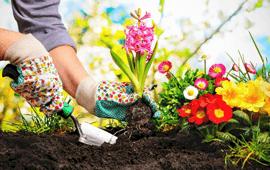 Gardening poll