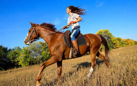 Horseback riding poll