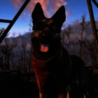 Dogs in games poll