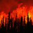 Forest fire poll