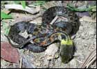 Snake_140x100