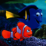 Finding dory poll