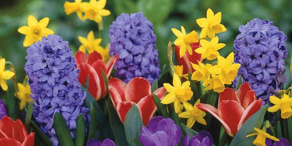 Original spring flowers quiz feature