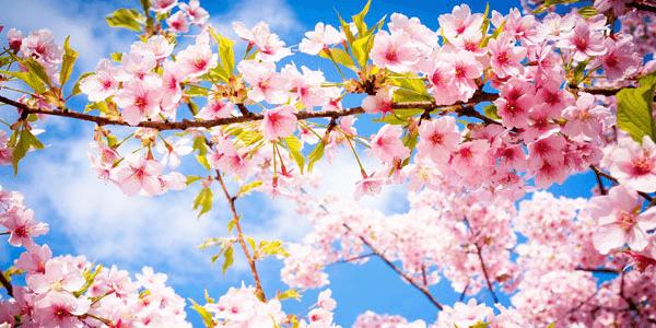 Original spring trivia quiz feature