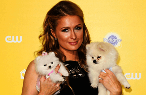 Whose Celebrity Pet Is This Quiz?