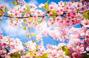 Spring Trivia Quiz!