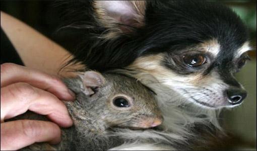 Norma & Squirrel
