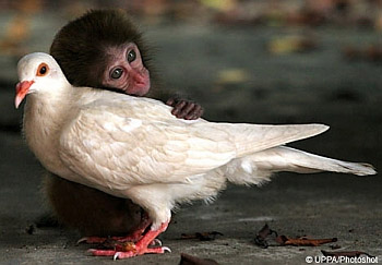 Monkey & Pigeon