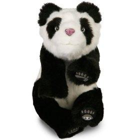 Alive Mini Panda Bear Cub