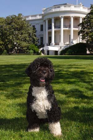 Presidential Pup