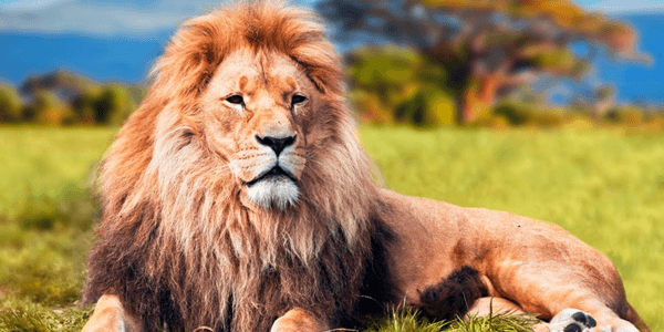Quiz! What Animal Personality are you?