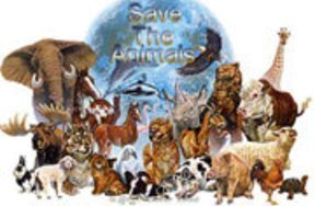 What animals should you save?